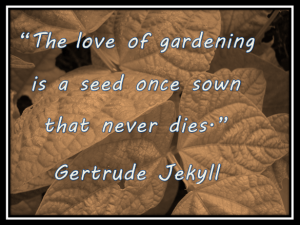 The Love of Gardening is a seed once sown that never dies